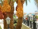 Hurghada 2007