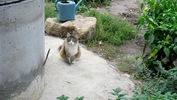 """Кошка """"Ксюша"""" рядом с колодцем"""